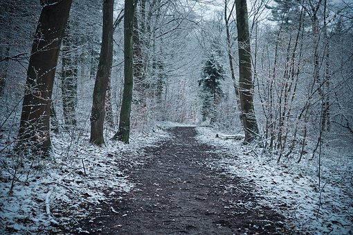 Winter, Wood, Nature, Frost, Snow, Cold, Landscape