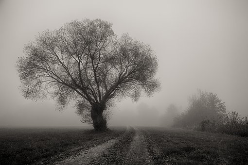 Tree, Fog, Landscape, Nature, Dawn, Weather, Loneliness
