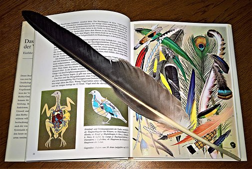 Book, Image Band, Pictures, Fachbuch, Feather, Know