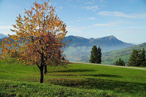 Tree, Landscape, Nature, Season, Wood, Rigi, Mountain