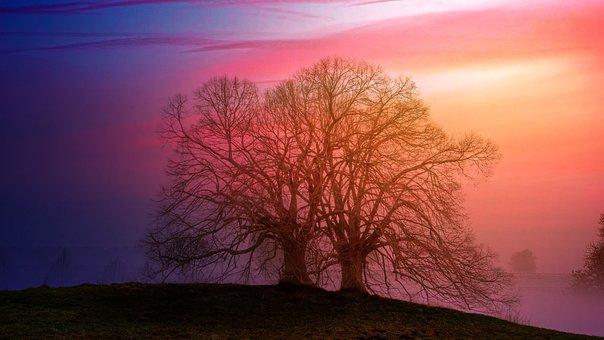 Dawn, Landscape, Nature, Tree, Sunset, Hill, Pastel