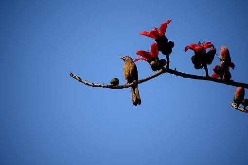 Sky, Outdoors, Nature, Bird, Flight, Fl, Wildlife