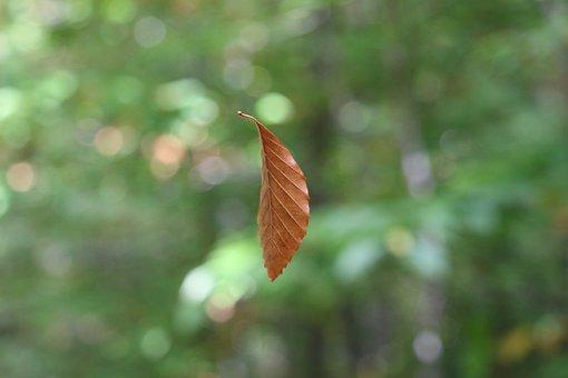 Suspended Leaf, Nature, Leaf, Outdoors, Flora, Summer