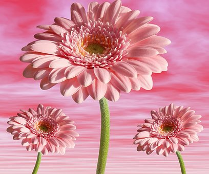 Flower, Plant, Nature, Petal, Summer, Flowers