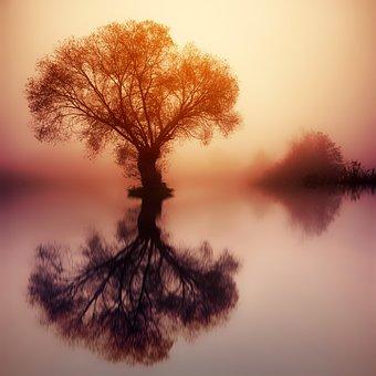Tree, Dawn, Silhouette, Sunset, Nature, Colourless, Fog