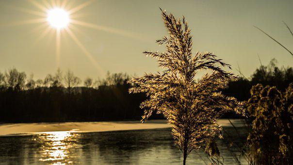 Nature, Waters, Dawn, Tree, Sunset, Reed, Landscape