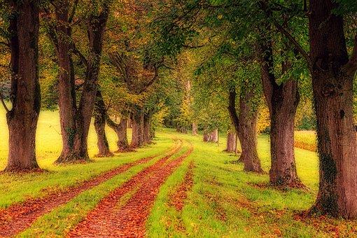 Tree, Wood, Nature, Landscape, Leaf, All