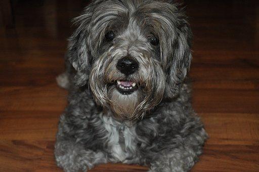 Dog, Cute, Animal, Canine, Domestic, Pet, Friendship
