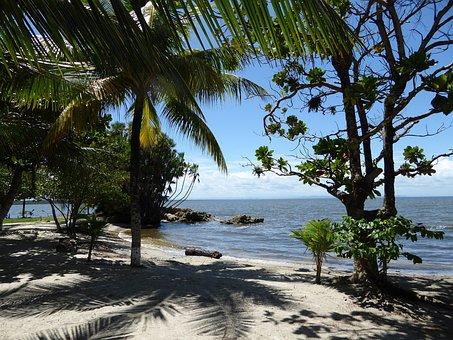 Beach, Caribbean, Guatemala, Sea, Palms