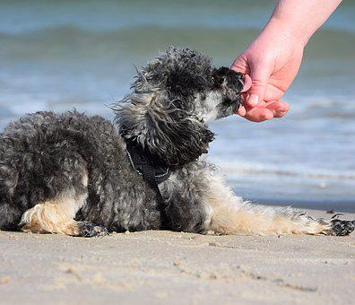 Dog, Play, Tongue, Hand, Arm, Connectedness, Love