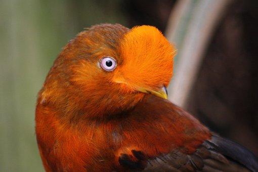 Bird, Animal World, Animal, Bill, Nature