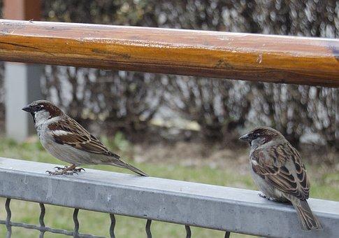 Birds, Beggars, Bold, Feather, Cute, Beak, Wildlife