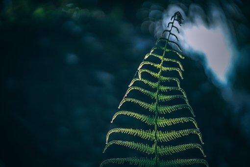Fern, Blurred, Background, Abstract, Garden, Bush, Tree