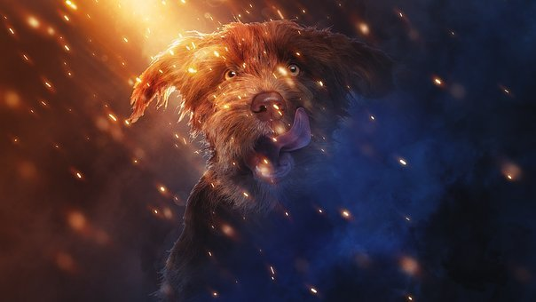 Puppy, Dog, Fantasy, Glory, Art, Abstract, Pets, Cute