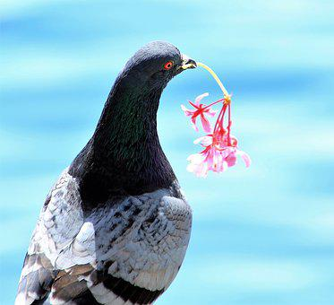 Bird, Nature, Dove, Wing, Feather, Flowers Cavalier