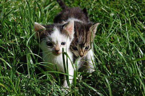 Cute, Animal, Grass, Small, Cat, Young, Pet, Kitten