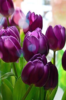 Tulip, Nature, Plant, Flower, Color, Lively, Floral