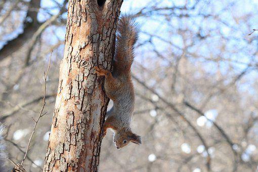 Tree, Nature, Outdoors, Wood, Winter, Squirrel