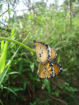 Nature, Insect, Butterfly, Outdoors, Animal, Summer