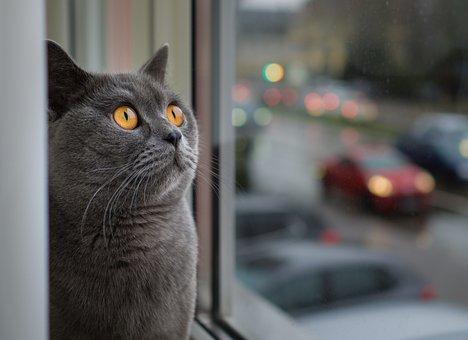 Cat, Portrait, Animal, Pet, Cute, Window, Cat Face
