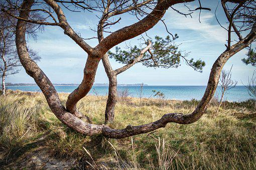 Tree, Nature, Landscape, Wood, Waters, Sky, Travel