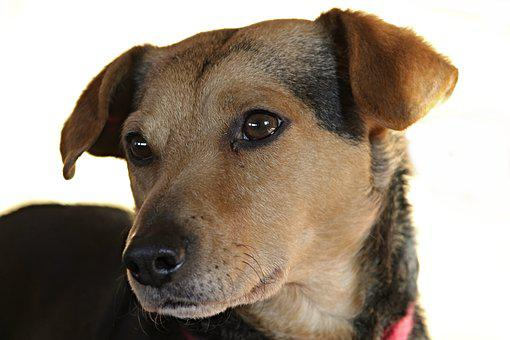 Dog, Hybrid, Mixed Breed Dog, Portrait, Pet, Animal