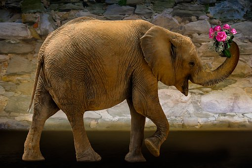 Animals, Nature, Elephant, Flowers, Get Well Soon