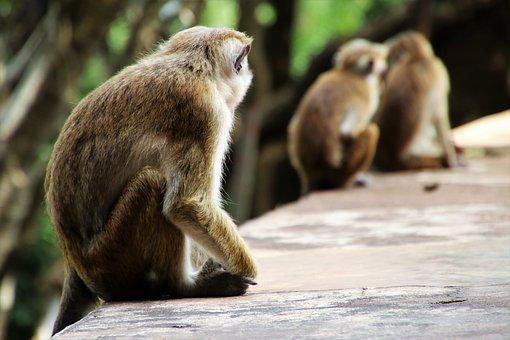 Nature, Monkey, Mammals, Wild, Animals, Sit
