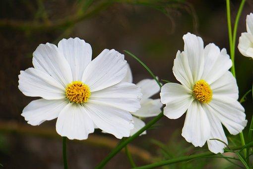 Nature, Flower, Plant, Petal, Leaf, Garden, Bloom