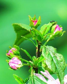 Nature, Flower, Leaf, Plant, Outdoor, Garden, Bud
