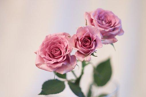 Flower, Rose, Petal, Bouquet, Plant, Love, Give