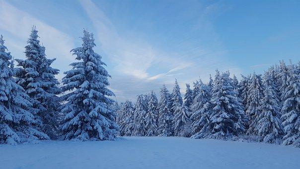 Snow, Winter, Frost, Cold, Frozen, Season, Fir