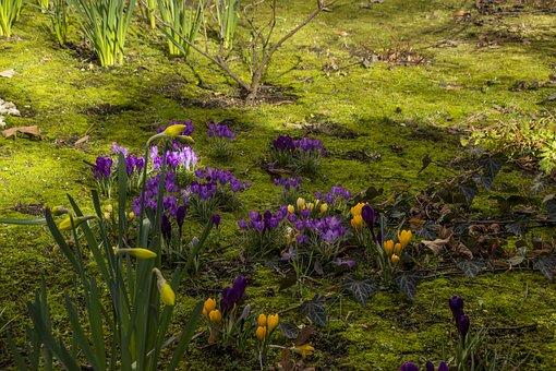 Flower, Nature, Grass, Flora, Outdoors, Spring