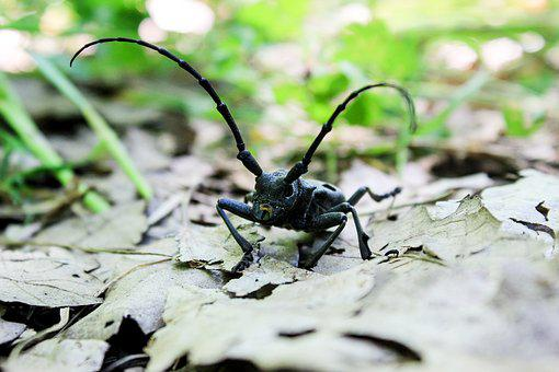 Nature, Insect, Environment, Little, Invertebrate