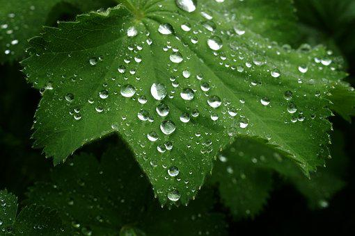 Rain, Leaf, Dew, Drop, Nature, Macro, Close Up, Purity