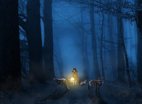 Light, Dark, Nature, Mystery, Little Red Riding Hood