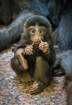 Monkey, Primacy, Mammals, Living Nature, Little