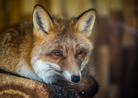 Mammals, Living Nature, Animals