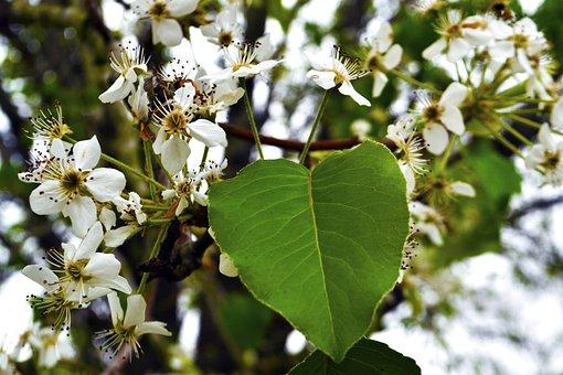 Tree, Autumn, Seasonal, Seasons, Nature, Natural