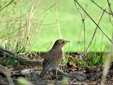 Animal World, Nature, Bird, Animal, Grass, Wild, Wing