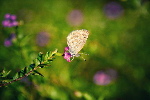 Nature, Flower, Butterfly, Outdoor, Insect, Plant