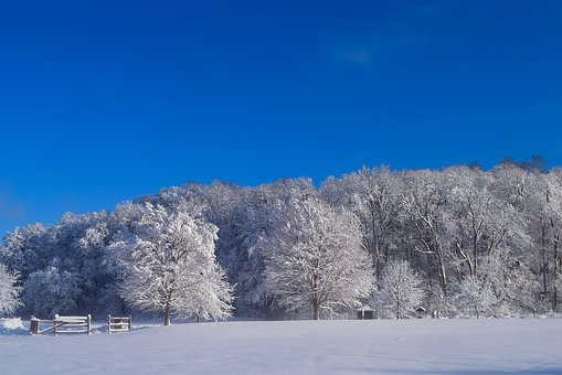 Landscape, Snow, Winter, Tree, Cold, Frost, Nature