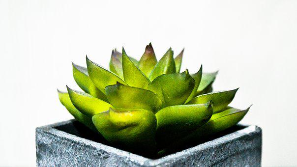 Plant, Cactaceae, Nature, Isolated, Plant Succulent