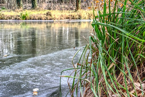 Waters, Nature, River, Reflection, Grass, Frozen, Lake