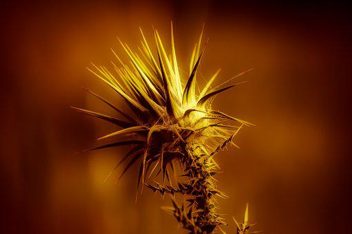 Thorns, Gold, Bright, Glow, Sharp