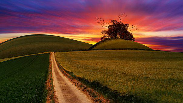 Sky, Tree, Hill, Sunset, Nature, Panorama, Landscape