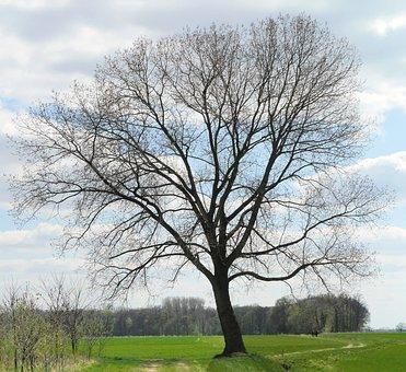 Early Spring, Foliation, Tree, Bud, Leaf Green