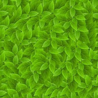 Leaf, Pattern, Plant, Background Sheets, Texture