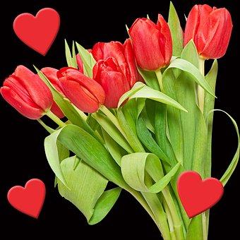 Tulip, Flower, Bouquet Of Flowers, Plant, Nature