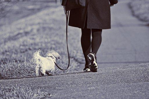 Woman, Walking, Dog, Leash, Leg, Foot, Shoe, Active